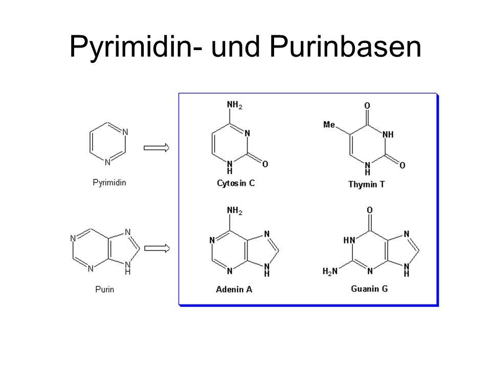 RNA DNA N H NH O O Uracil N H NH O O CH 3 Thymin OH H O H O OH CH 2 2´-Desoxyribose OH OH O H O OH CH 2 Ribose 35 3 35 5