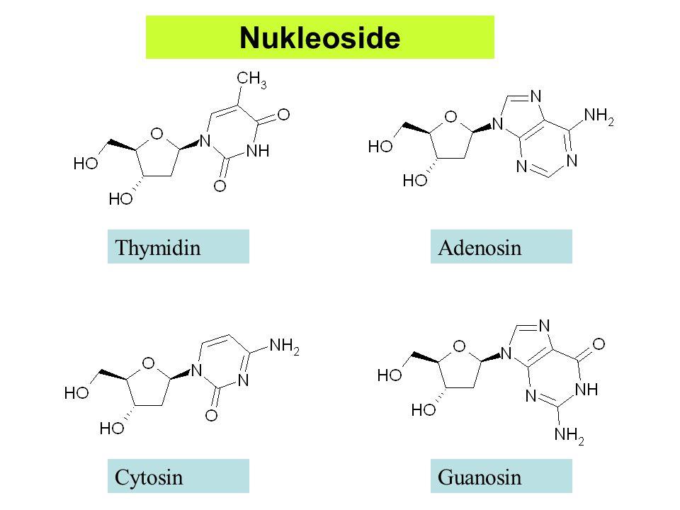 N N C H C C C H C N N NH 2 Adenin Ribose Phosphat O C 5 H C4C4 H OH O H HH C1C1 C3C3 C2C2 H PO O O-O- Adenosinmonophosphat (AMP) Nukleotide