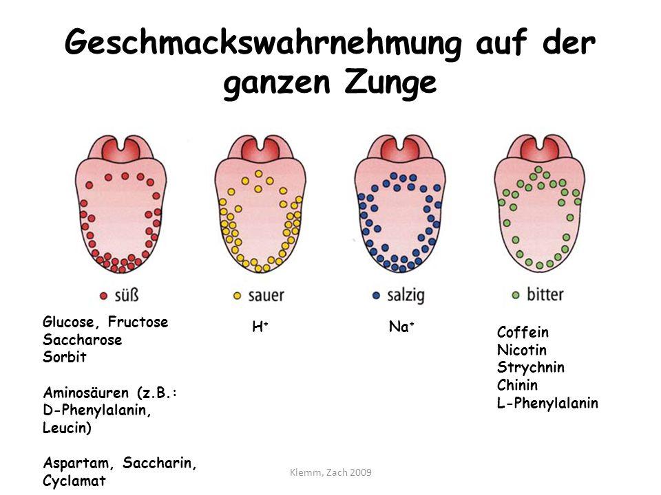 Geschmackswahrnehmung auf der ganzen Zunge Glucose, Fructose Saccharose Sorbit Aminosäuren (z.B.: D-Phenylalanin, Leucin) Aspartam, Saccharin, Cyclama
