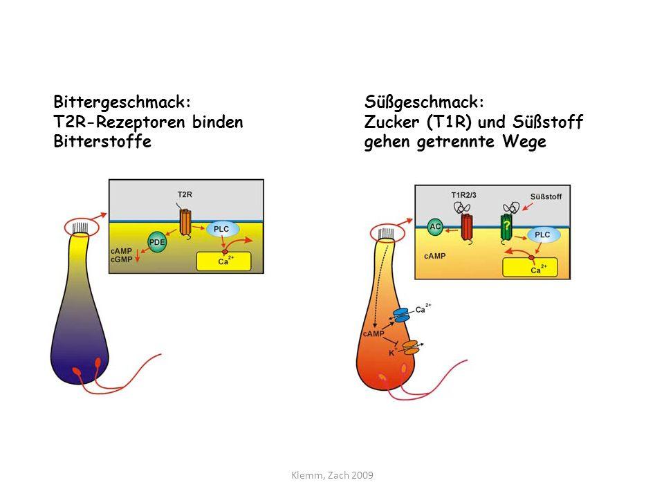 Der fünfte Geschmack: umami Glutamat-Rezeptoren vermitteln den Umami-Geschmack (Kombination v.