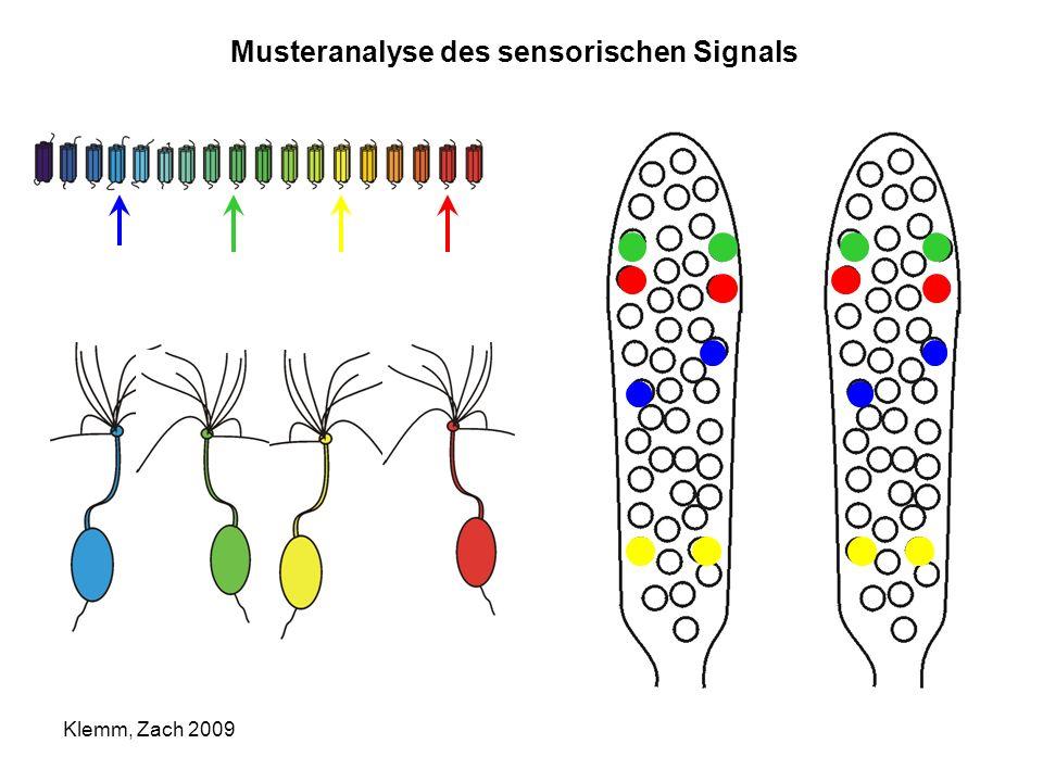 Musteranalyse des sensorischen Signals Klemm, Zach 2009