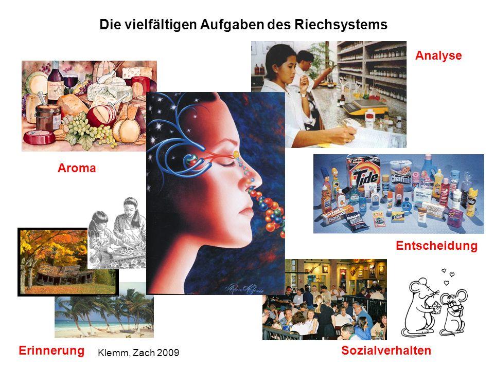 Die vielfältigen Aufgaben des Riechsystems Aroma Analyse Erinnerung Entscheidung Sozialverhalten Klemm, Zach 2009