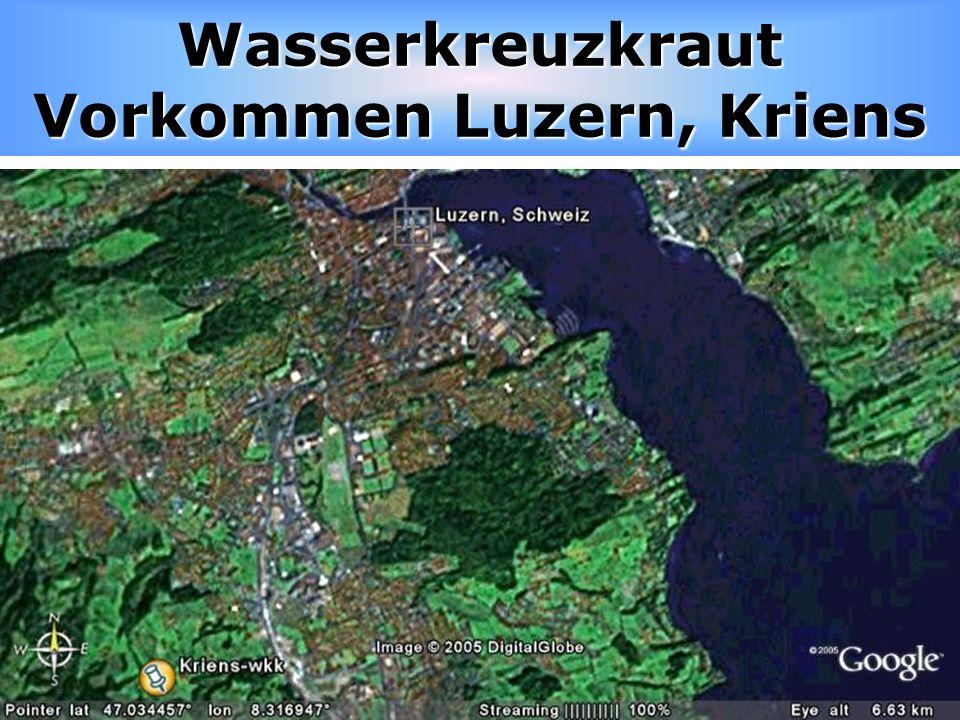 Wasserkreuzkraut Vorkommen Luzern, Kriens