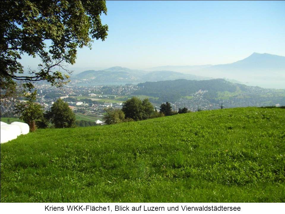 Kriens WKK-Fläche1, Blick auf Luzern und Vierwaldstädtersee