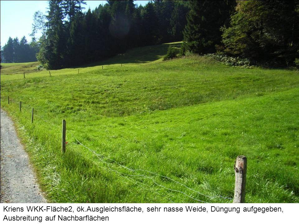 Kriens WKK-Fläche2, ök.Ausgleichsfläche, sehr nasse Weide, Düngung aufgegeben, Ausbreitung auf Nachbarflächen