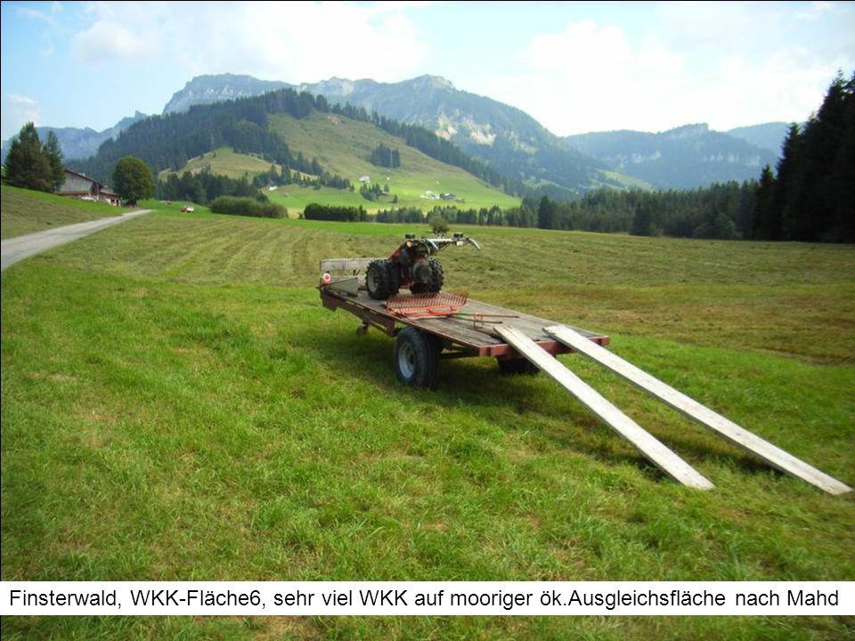 Finsterwald, WKK-Fläche6, sehr viel WKK auf mooriger ök.Ausgleichsfläche nach Mahd