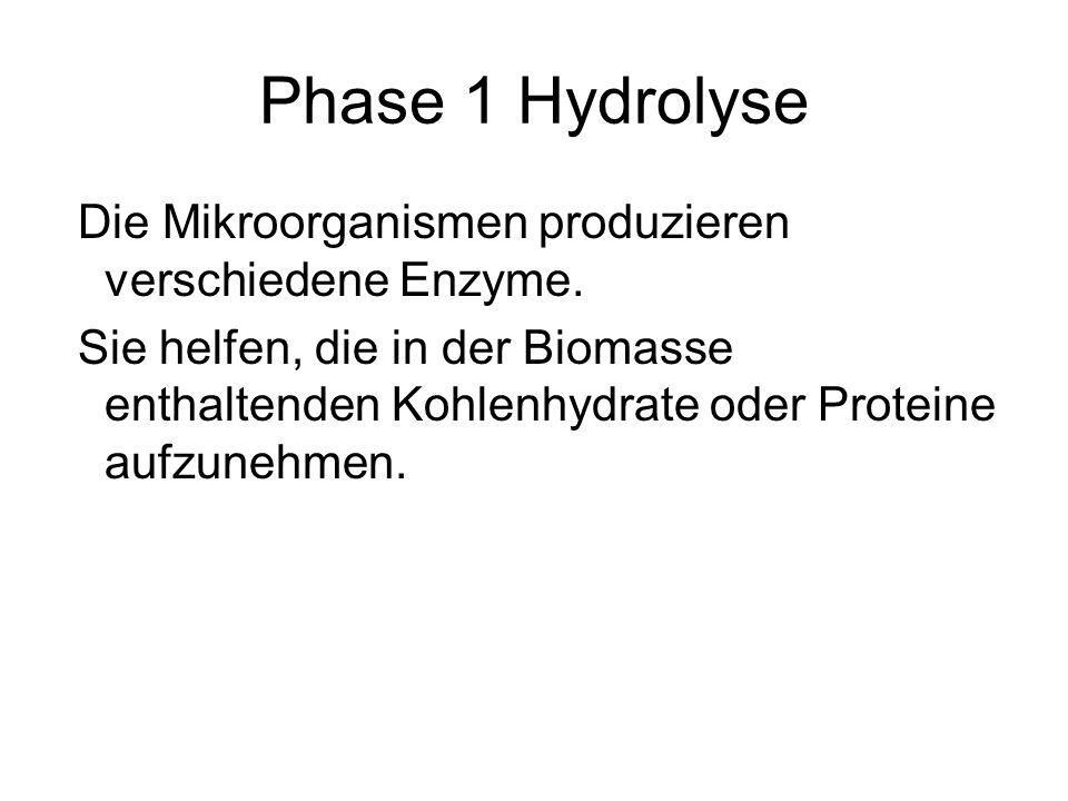 Phase 1 Hydrolyse Die Mikroorganismen produzieren verschiedene Enzyme. Sie helfen, die in der Biomasse enthaltenden Kohlenhydrate oder Proteine aufzun
