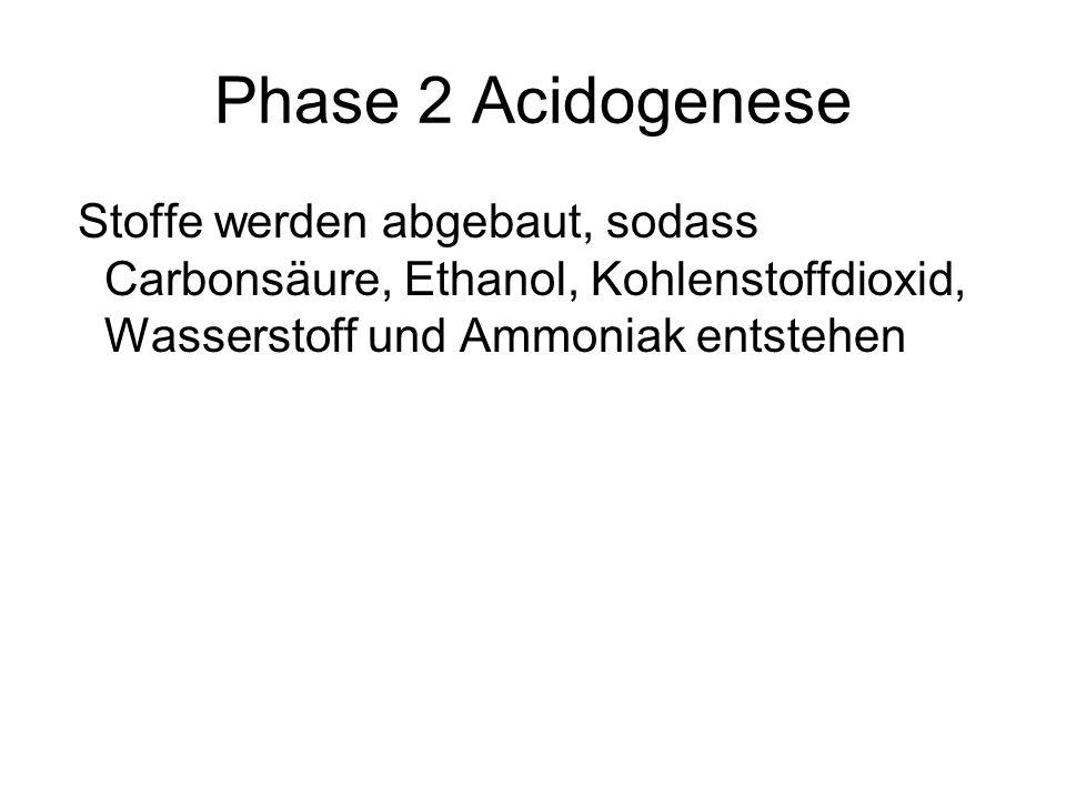 Phase 2 Acidogenese Stoffe werden abgebaut, sodass Carbonsäure, Ethanol, Kohlenstoffdioxid, Wasserstoff und Ammoniak entstehen