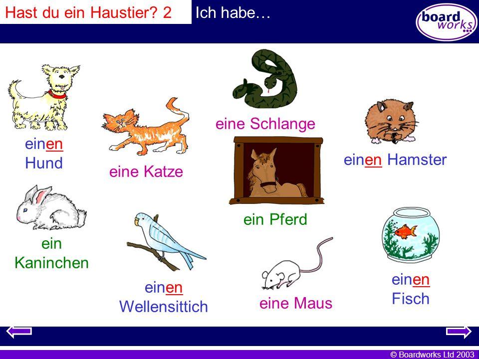 © Boardworks Ltd 2003 Hast du ein Haustier? 2Ich habe… einen Hund eine Katze eine Schlange einen Hamster ein Kaninchen einen Wellensittich ein Pferd e