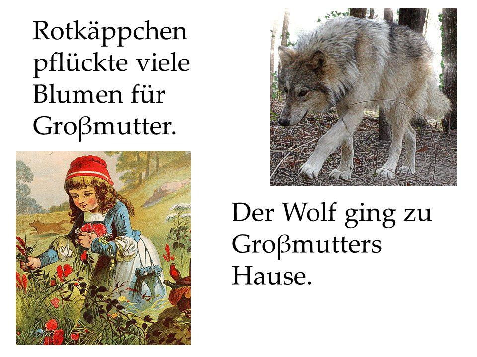 Der Wolf ging zu Groβmutters Hause. Rotkäppchen pflückte viele Blumen für Groβmutter.