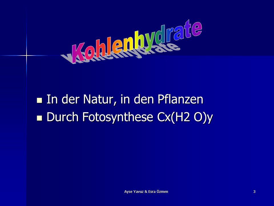 Ayse Yavuz & Esra Özmen3 In der Natur, in den Pflanzen In der Natur, in den Pflanzen Durch Fotosynthese Cx(H2 O)y Durch Fotosynthese Cx(H2 O)y