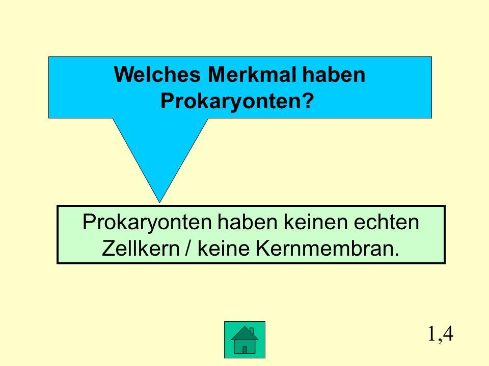 1,4 Welches Merkmal haben Prokaryonten.