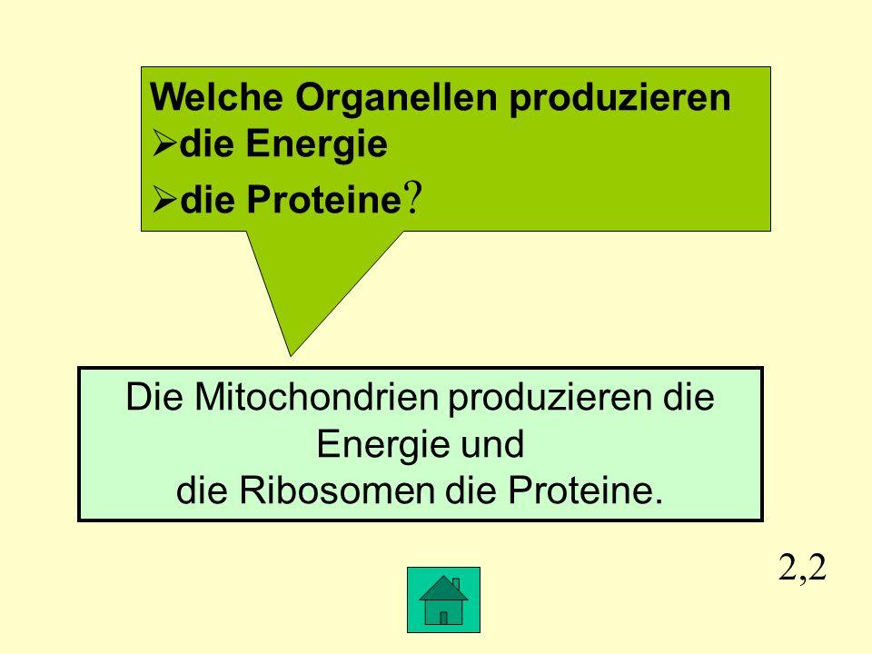 2,2 Welche Organellen produzieren die Energie die Proteine .