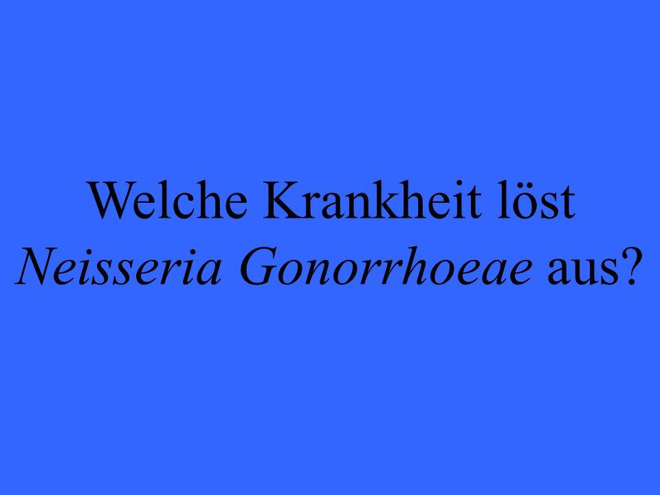 Welche Krankheit löst Neisseria Gonorrhoeae aus?
