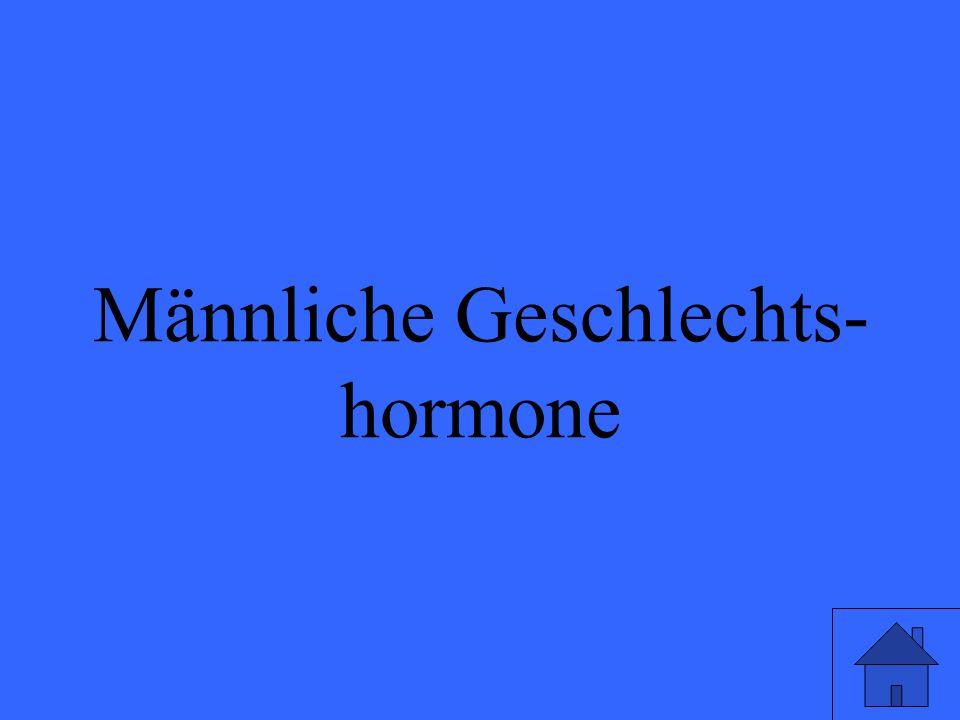 Männliche Geschlechts- hormone