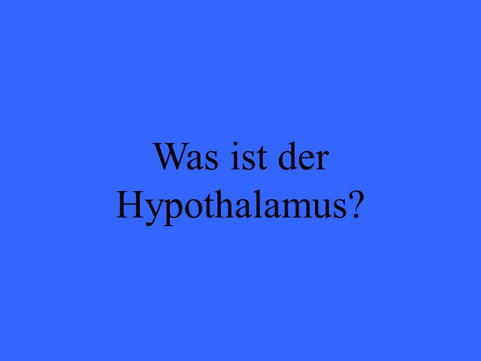 Was ist der Hypothalamus?