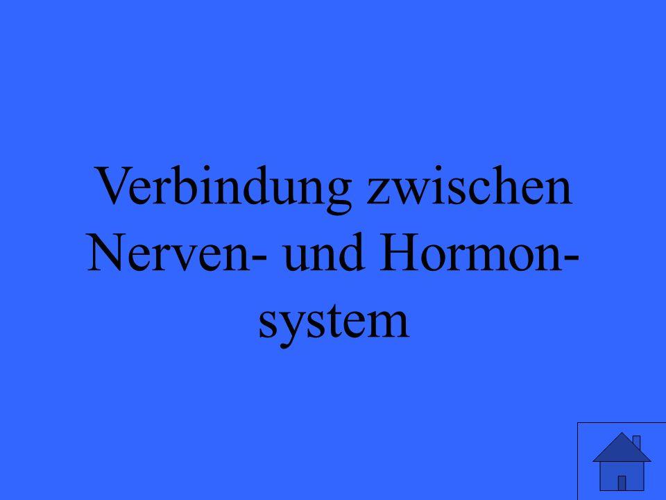 Verbindung zwischen Nerven- und Hormon- system