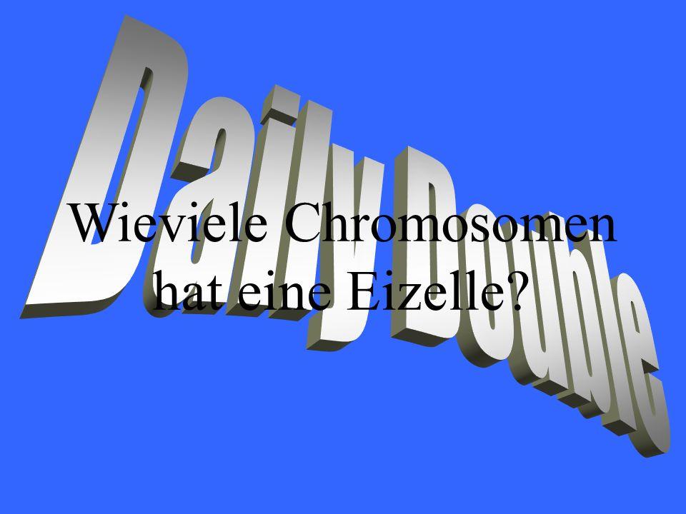 Wieviele Chromosomen hat eine Eizelle?