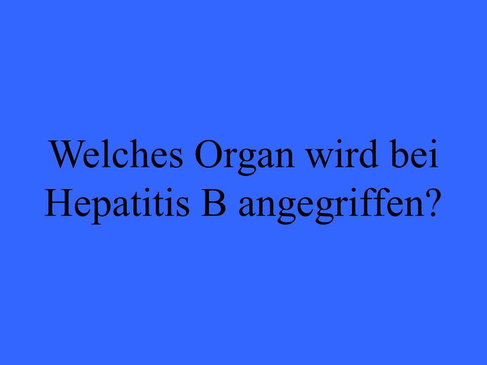 Welches Organ wird bei Hepatitis B angegriffen?