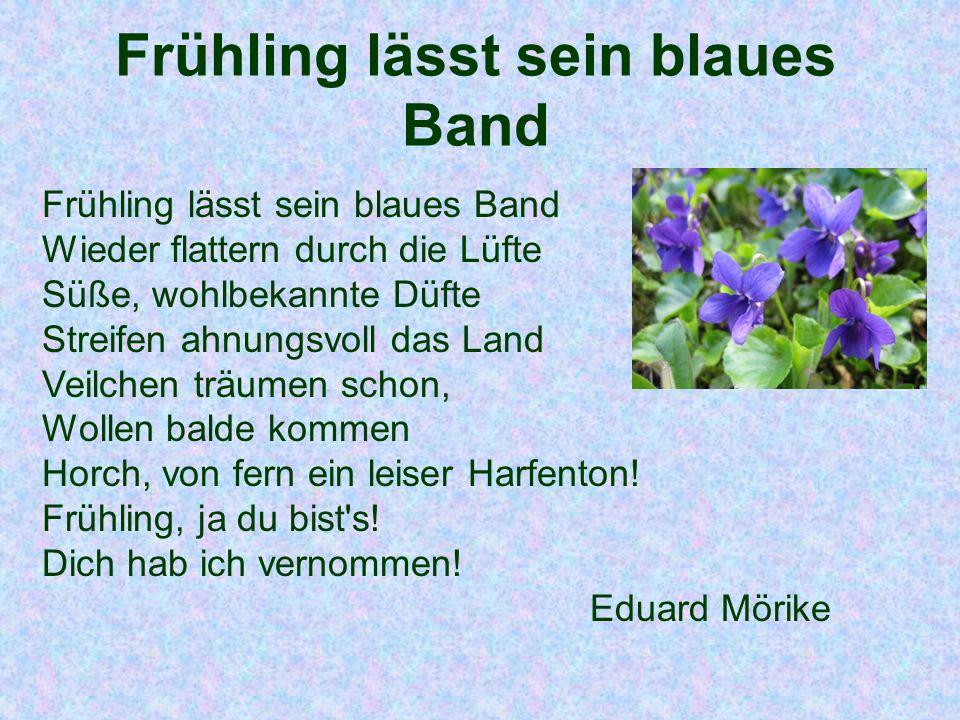 Frühling lässt sein blaues Band Frühling lässt sein blaues Band Wieder flattern durch die Lüfte Süße, wohlbekannte Düfte Streifen ahnungsvoll das Land
