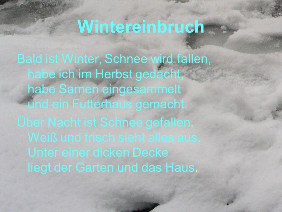 Wintereinbruch Bald ist Winter, Schnee wird fallen, habe ich im Herbst gedacht, habe Samen eingesammelt und ein Futterhaus gemacht. Über Nacht ist Sch