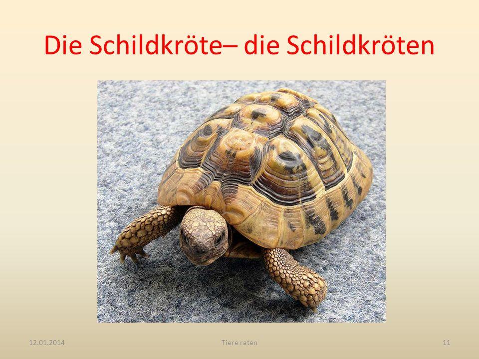 Die Schildkröte– die Schildkröten 12.01.2014Tiere raten11