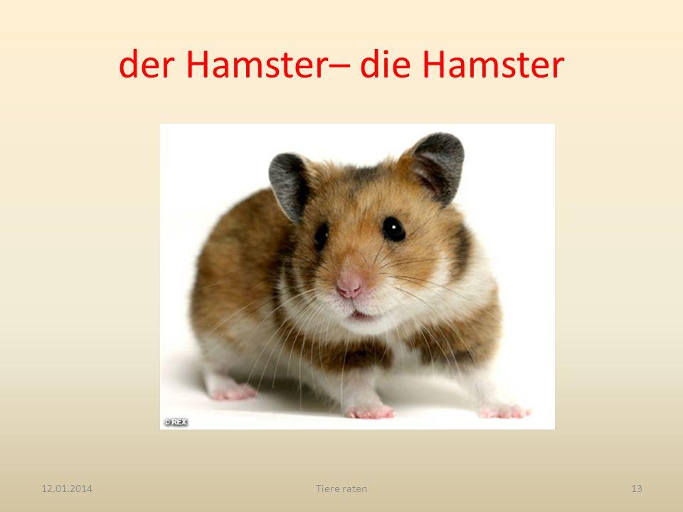 der Hamster– die Hamster 12.01.2014Tiere raten13