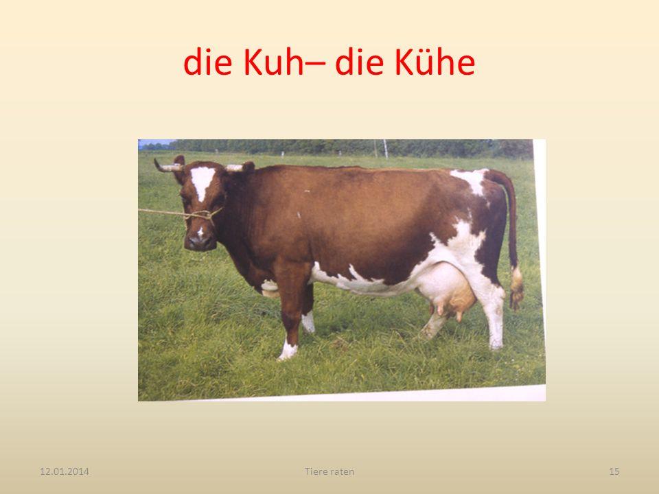 die Kuh– die Kühe 12.01.2014Tiere raten15