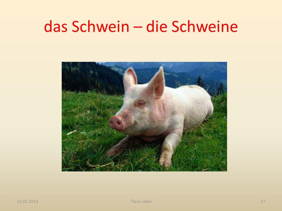 das Schwein – die Schweine 12.01.2014Tiere raten17