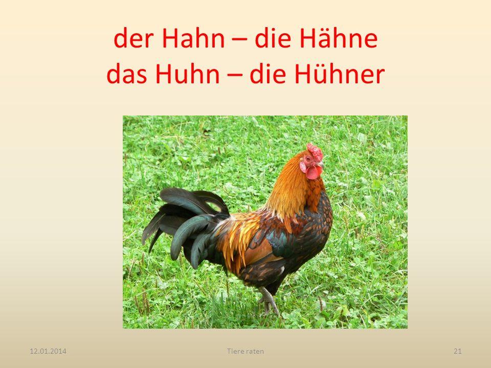 der Hahn – die Hähne das Huhn – die Hühner 12.01.2014Tiere raten21
