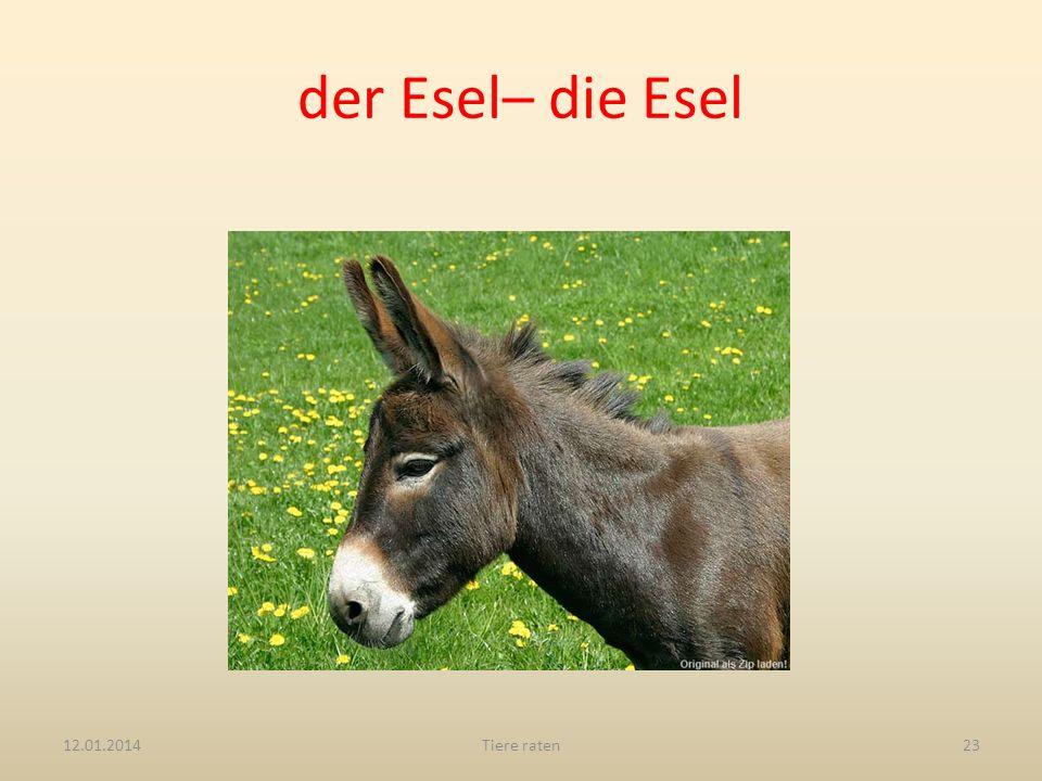 der Esel– die Esel 12.01.2014Tiere raten23