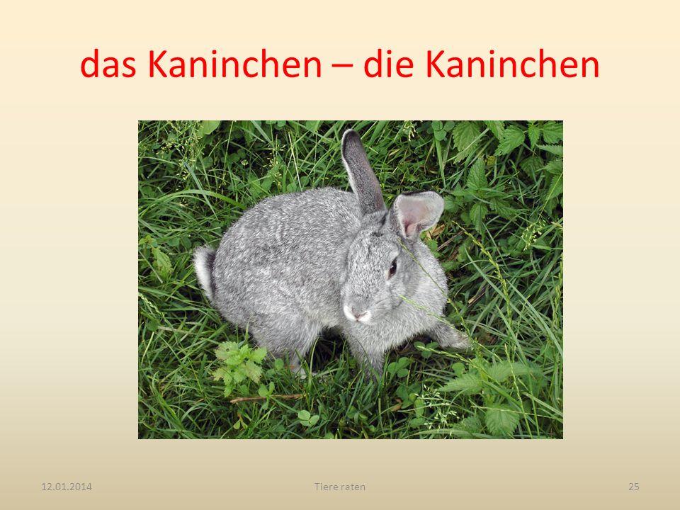 das Kaninchen – die Kaninchen 12.01.2014Tiere raten25