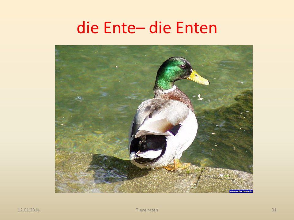 die Ente– die Enten 12.01.2014Tiere raten31