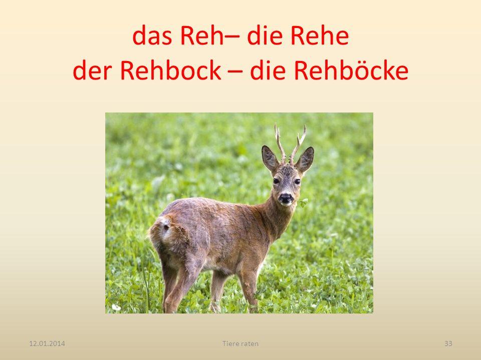 das Reh– die Rehe der Rehbock – die Rehböcke 12.01.2014Tiere raten33