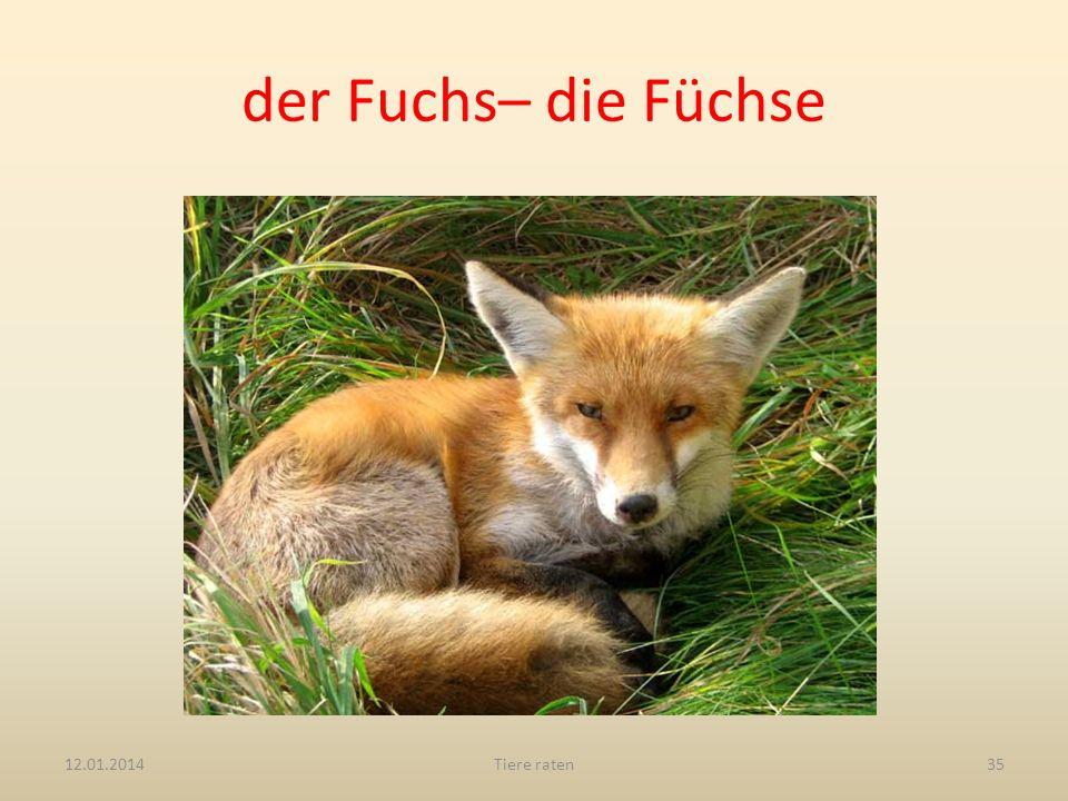 der Fuchs– die Füchse 12.01.2014Tiere raten35