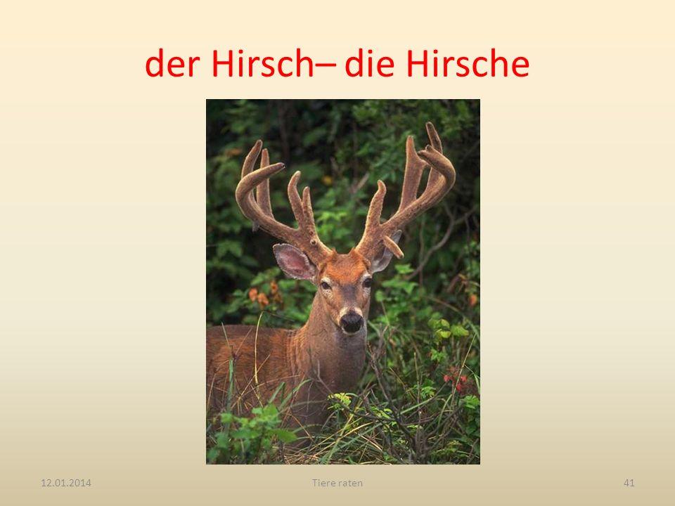 der Hirsch– die Hirsche 12.01.2014Tiere raten41