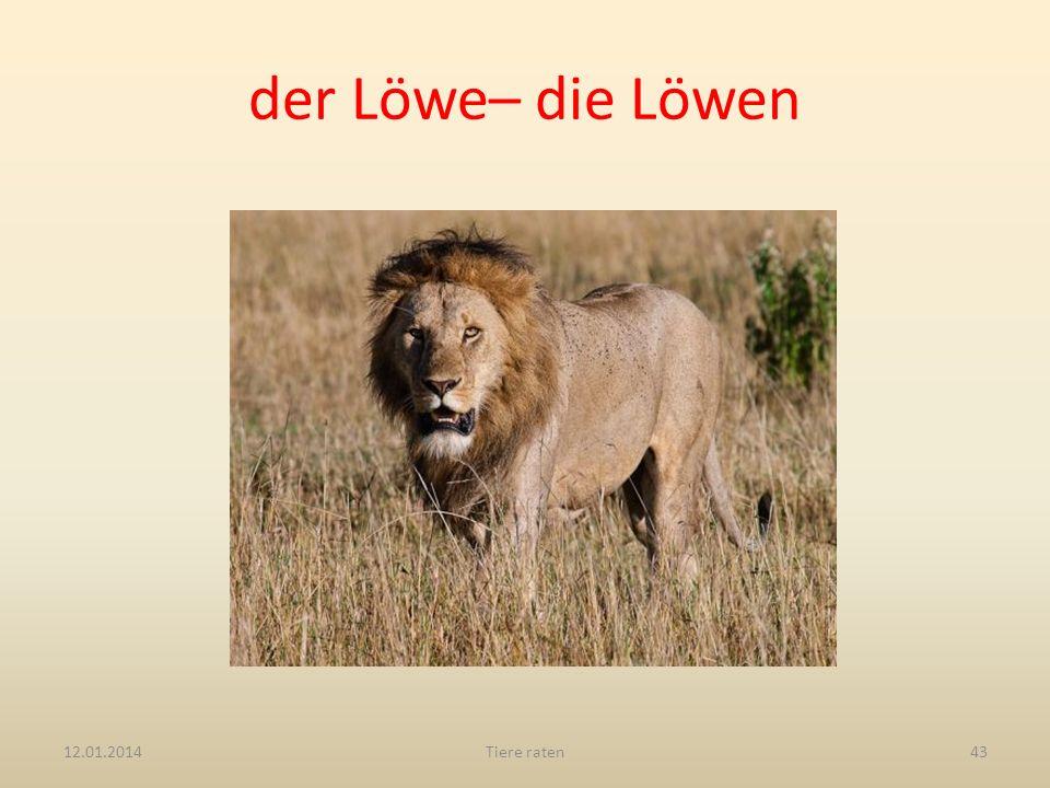 der Löwe– die Löwen 12.01.2014Tiere raten43