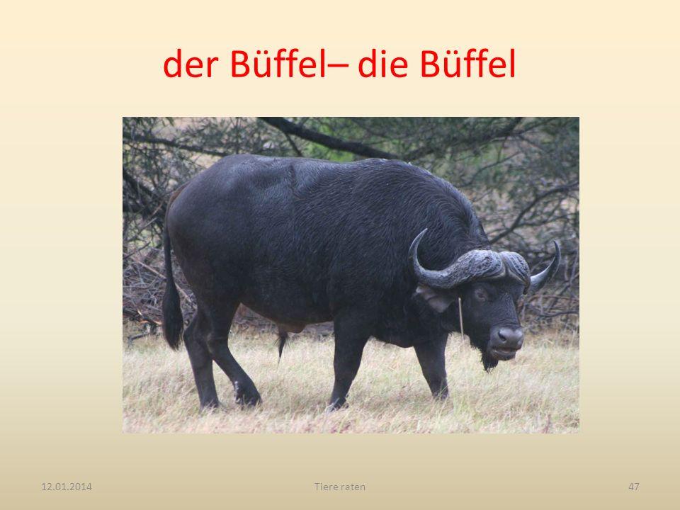 der Büffel– die Büffel 12.01.2014Tiere raten47