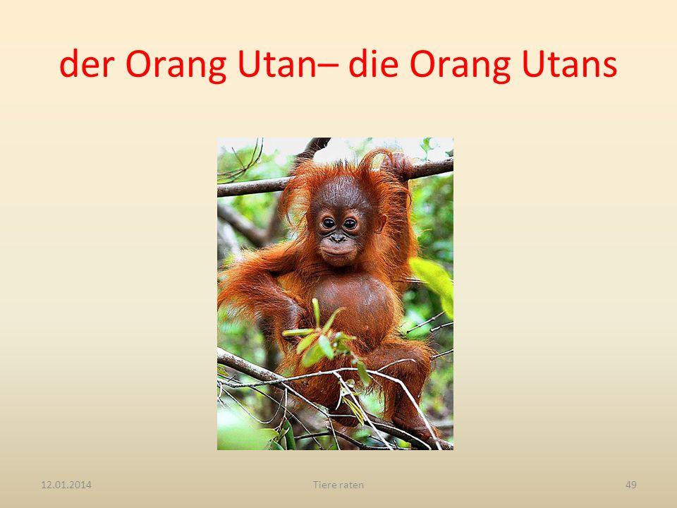 der Orang Utan– die Orang Utans 12.01.2014Tiere raten49