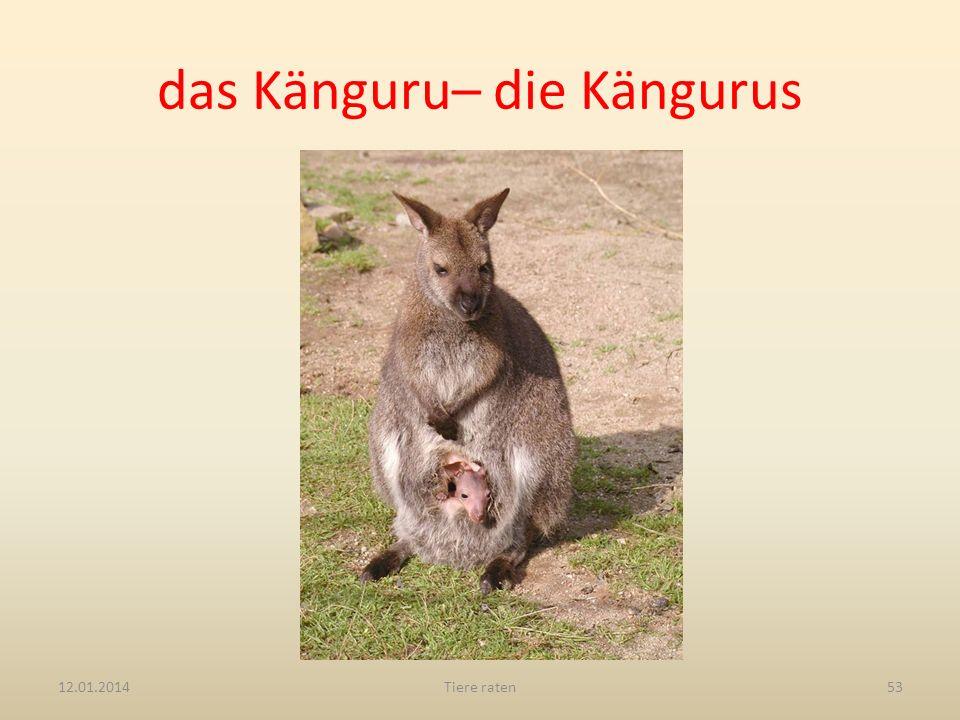 das Känguru– die Kängurus 12.01.2014Tiere raten53