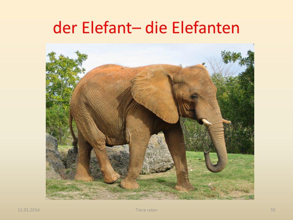 der Elefant– die Elefanten 12.01.2014Tiere raten55