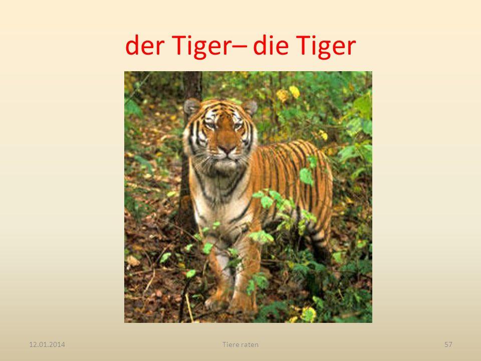 der Tiger– die Tiger 12.01.2014Tiere raten57