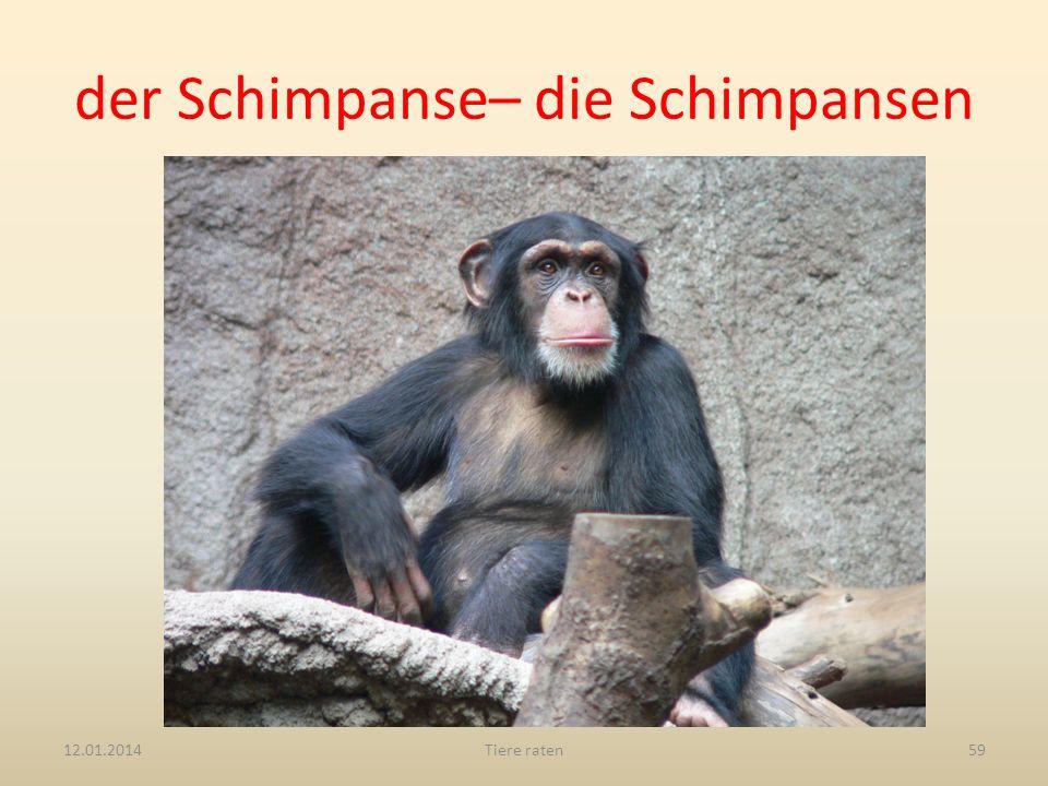 der Schimpanse– die Schimpansen 12.01.2014Tiere raten59