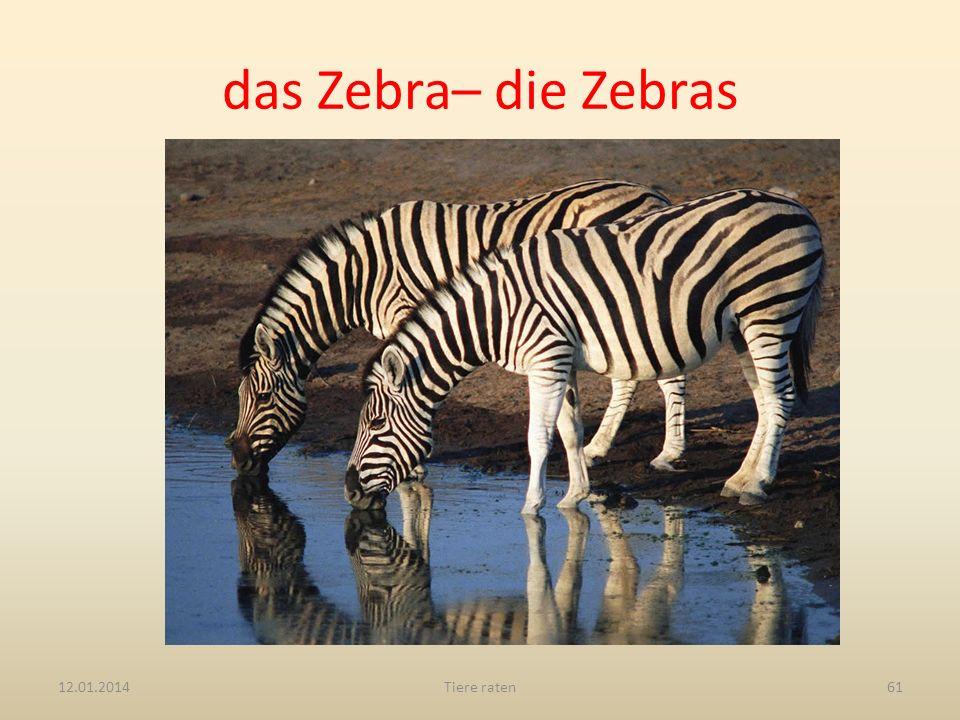 das Zebra– die Zebras 12.01.2014Tiere raten61