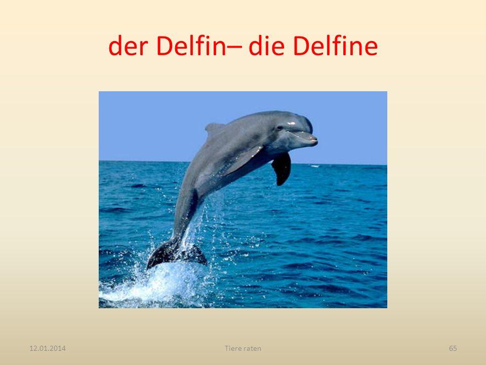 der Delfin– die Delfine 12.01.2014Tiere raten65