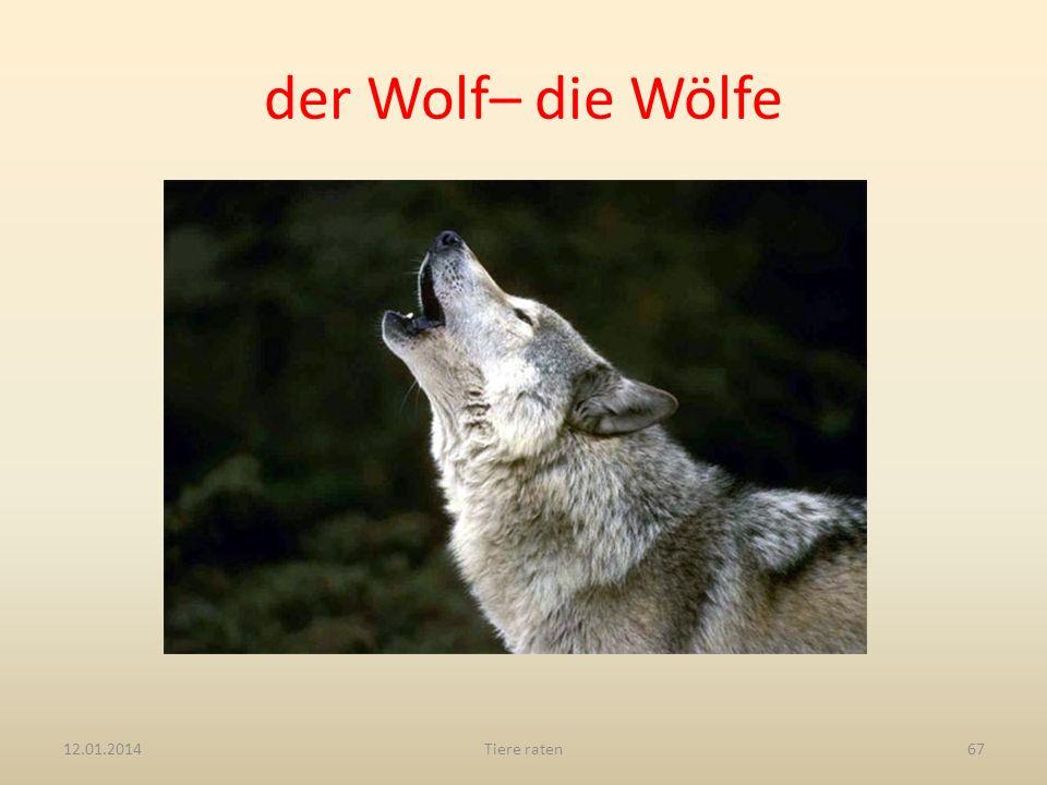 der Wolf– die Wölfe 12.01.2014Tiere raten67