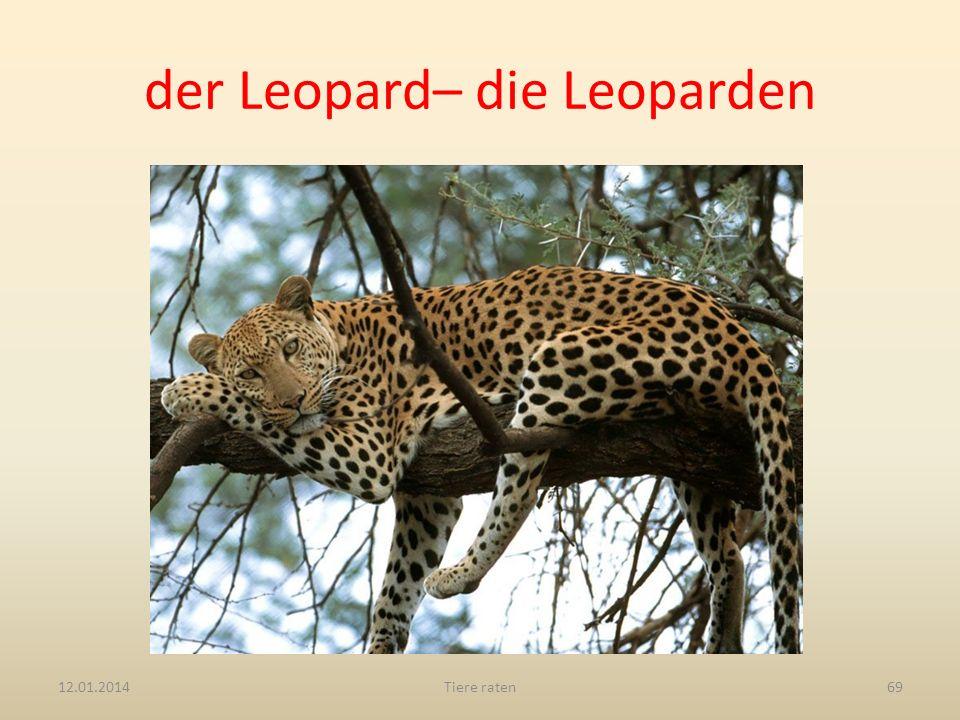 der Leopard– die Leoparden 12.01.2014Tiere raten69