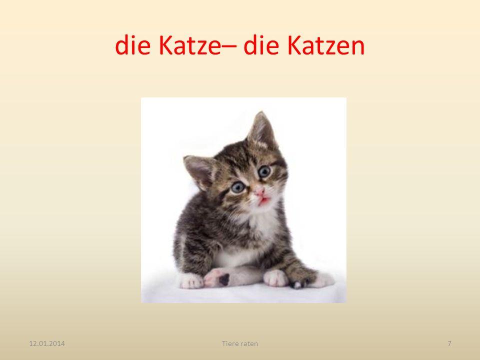 die Katze– die Katzen 12.01.2014Tiere raten7