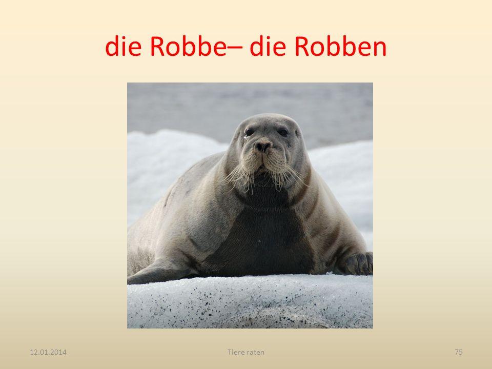 die Robbe– die Robben 12.01.2014Tiere raten75