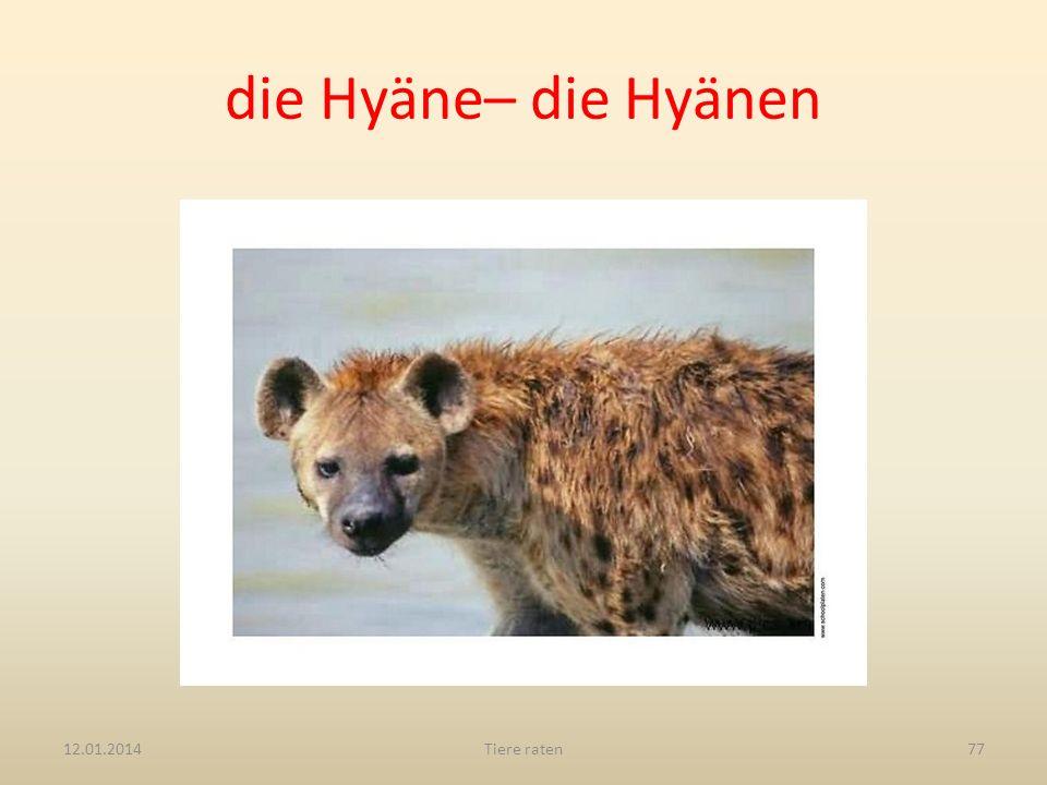 die Hyäne– die Hyänen 12.01.2014Tiere raten77